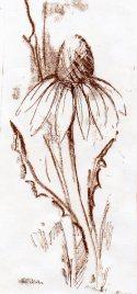 litho daisy198