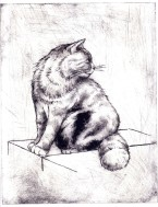 cat etching